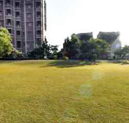 College Lawns